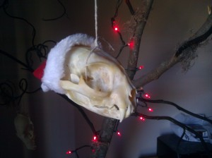 Bobcat skull in a santa hat